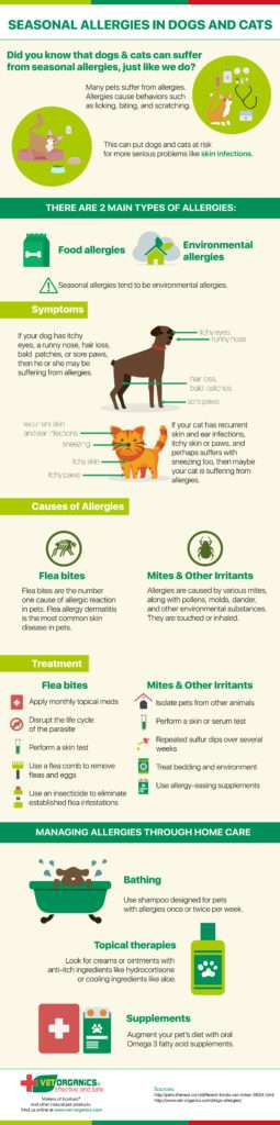 Infographic - Seasonal Allergies in Dogs & Cats