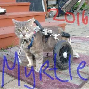 Myrtle-Specially-Abled Dogs and Cats