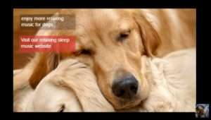 Pet Therapy music on YouTube (click to listen now)
