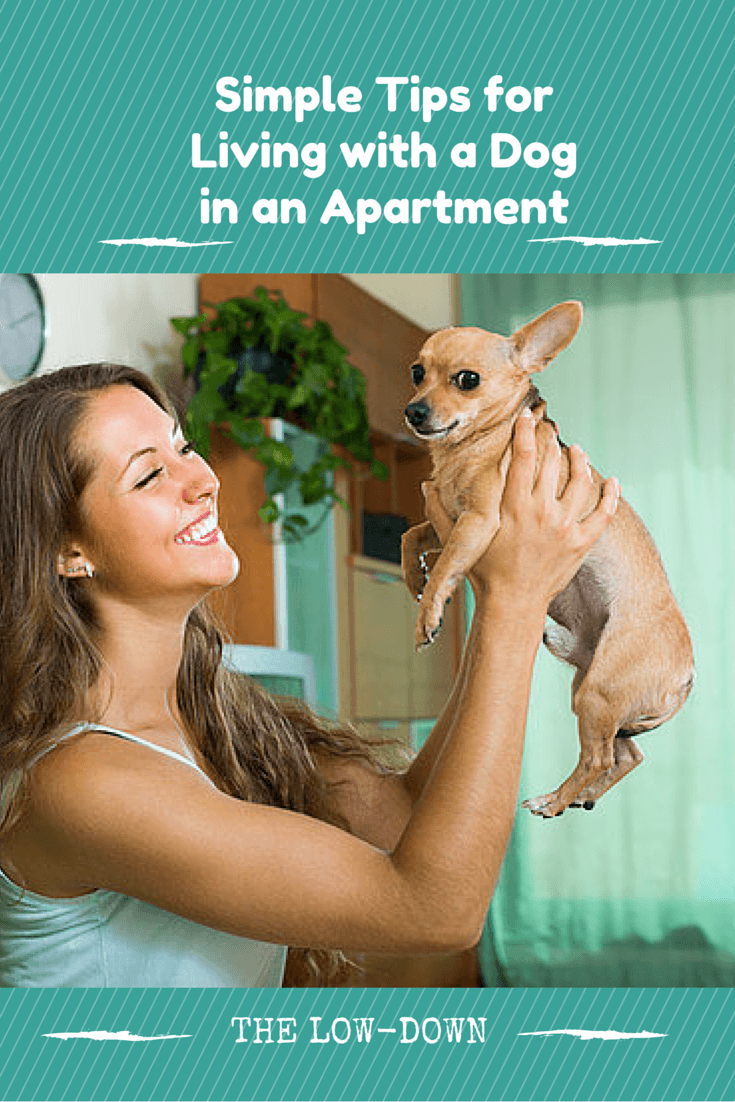 Apartment Living With Your Pup
