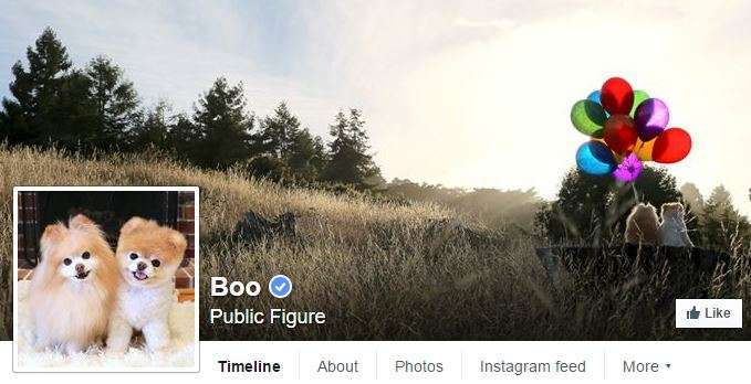 Boo has tons of Facebook fans.