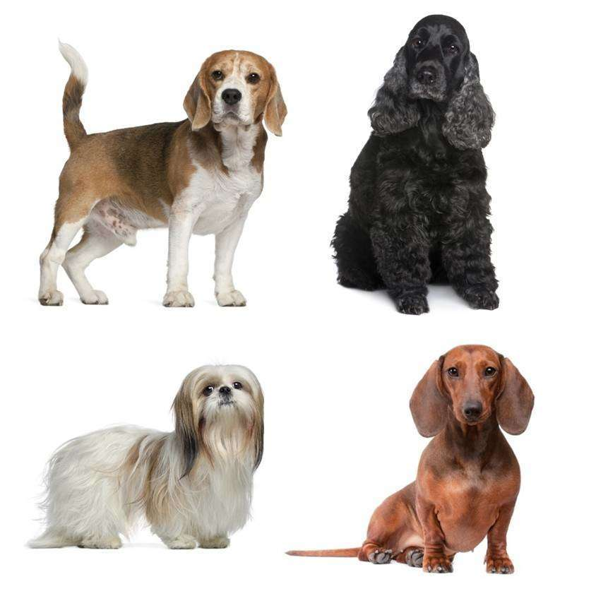 Some of the breed that get stones include