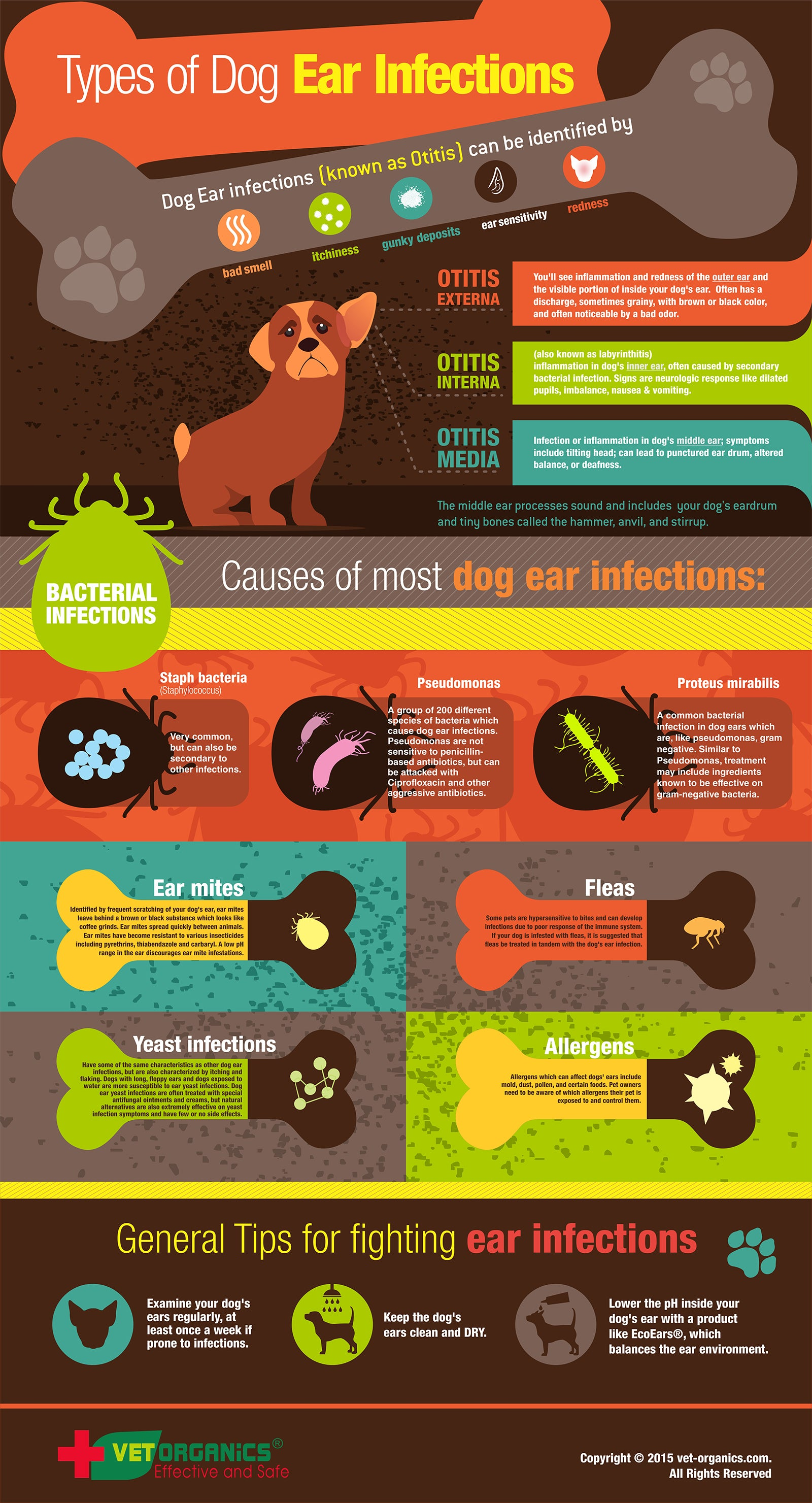 Infographic Dog Ear Infections EcoEars for Dogs