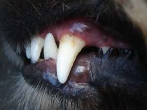 Slight discoloration is natural but you'll want to inspect the gums frequently.