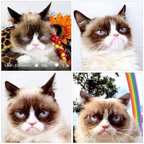 Some of the many faces of Grumpy Cat, from her Official Facebook page.
