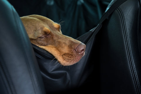 What You Need To Know About Dogs And Motion Sickness | Vet Organics