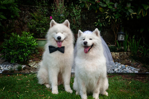 Taking Fido to a Wedding? Here's What You Need To Know | Vet Organics