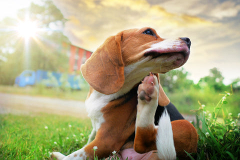 The Dog Days of Summer | Vet Organics