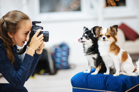 Pro Tips On How To Take Insta-worthy Pet Photos, Part 3 | Vet Organics