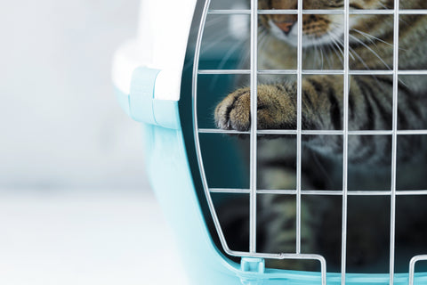 Navigating Air Travel with Dogs and Cats | Vet Organics