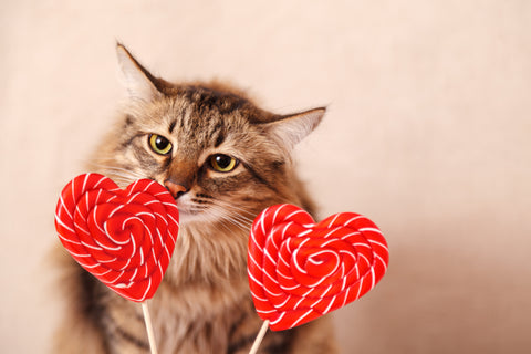 How to tell our cats we love them in ways they can understand | Vet Organics