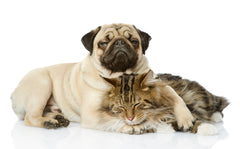 Helping Pets Deal with Grief | Vet Organics