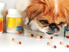How to Ensure You Don't Get Swindled by an Online Pet Pharmacy | Vet Organics
