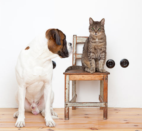 What Your Pet Choice Says About Your Personality | Vet Organics
