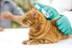 Pet Vaccine Primer: Concerns and Safety, Part Two | Vet Organics