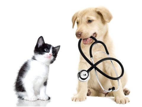 How to Choose the Right Veterinarian | Vet Organics