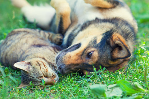 Creating A Sustainable, Zero-Waste Life with Your Pet | Vet Organics