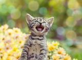 Cat Communication: Are You Listening? Vet Organics