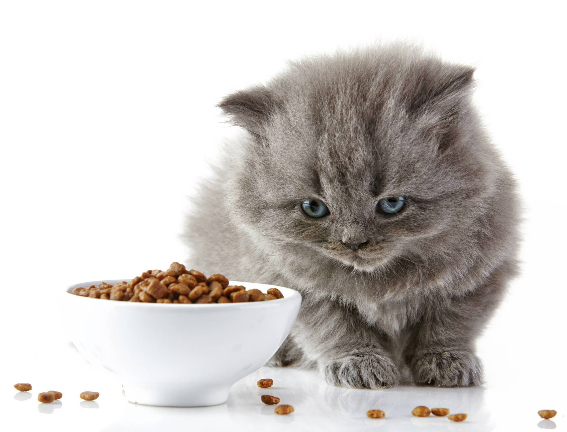 cats-taste-food-vet-organics