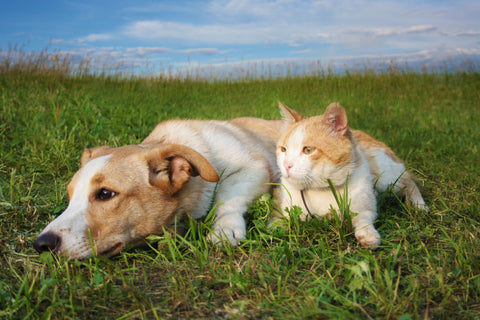 When Our Pets Get Sick in the Summer | Vet Organics