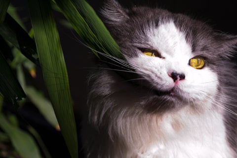https://www.vet-organics.com/collections/cat