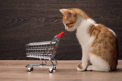 Where to Go to Get Your Next Fur Baby | Vet Organics
