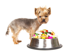 Vitamins Dogs Need And Why | Vet Organics