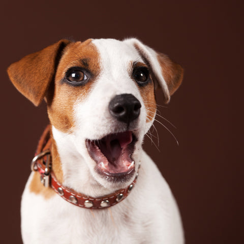 Are You Stressing Your Dog Out? | Vet Organics
