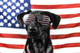 vet organics fourth of July pet safety