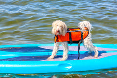 Water Safety Tips For Dogs | Vet Organics | EcoImmune