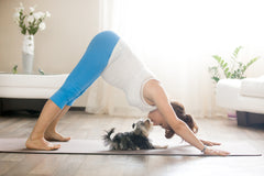 7 Ways to Get Fit with Fido | Vet Organics