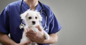 Common pet insurance myths