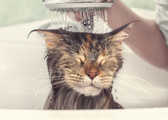 Vet Organics Cats Hate Water