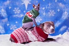 Holiday Pet Picture Tips For Photos You And Your Pet Can Be Proud Of | Vet Organics