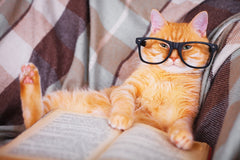 How Smart Is Your Cat? | Vet Organics