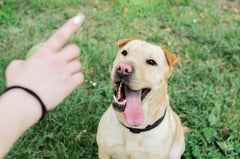 More Essential Commands To Teach Your Dog | Vet Organics | EcoTreats