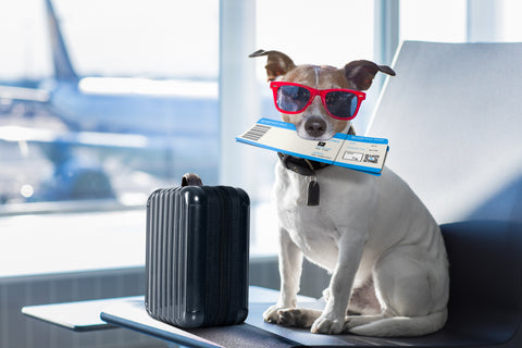 Air Travel with Dogs and Cats Part Two | Vet Organics
