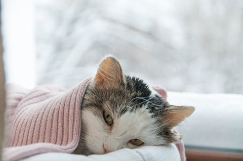When Cats Throw Up - What You Need To Know | Vet Organics
