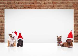 Pets for Holiday Parties