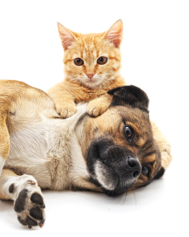 Give Back To Dogs, Cats, And People In Need | Vet Organics