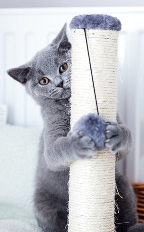 How to Train Kitty to Use Her Scratching Post | Vet Organics