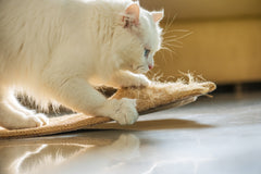 Kitty's New Year's Resolutions | Vet Organics