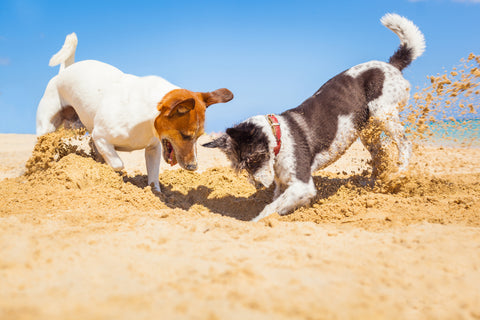 The Right Amount Of Exercise For Your Dog's Health And Lifestyle, Part Four | Vet Organics