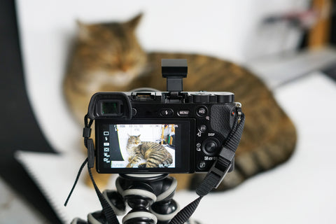 How To Take Perfect Insta-Worthy Pet Photos, Part Two | Vet Organics
