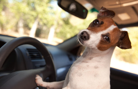 Road Tripping With Your Dog, Part 1 | Vet Organics
