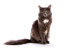 Cat Training - The Best Basic Commands For Beginners, Part Three | Vet Organics