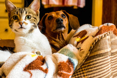 Pets And Their Supernatural Senses, According To Science | Vet Organics