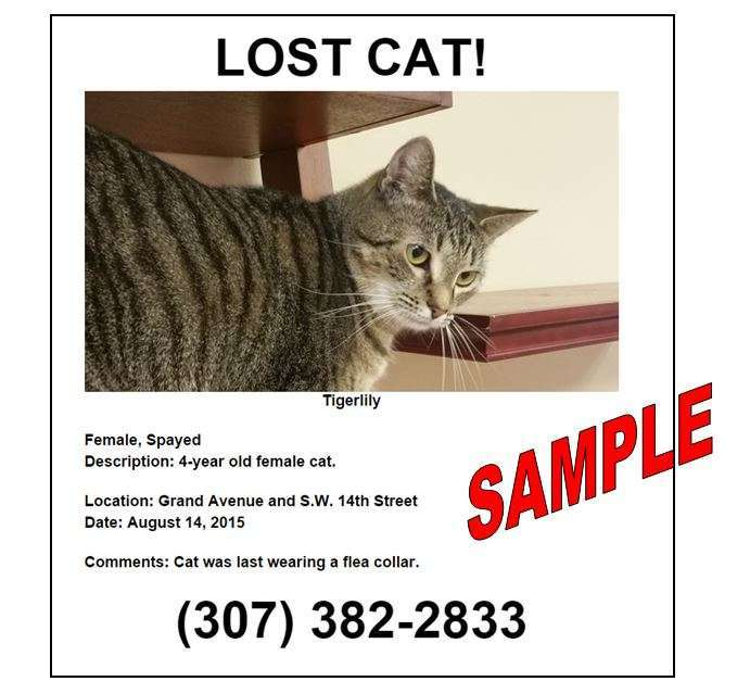Sample lost cat