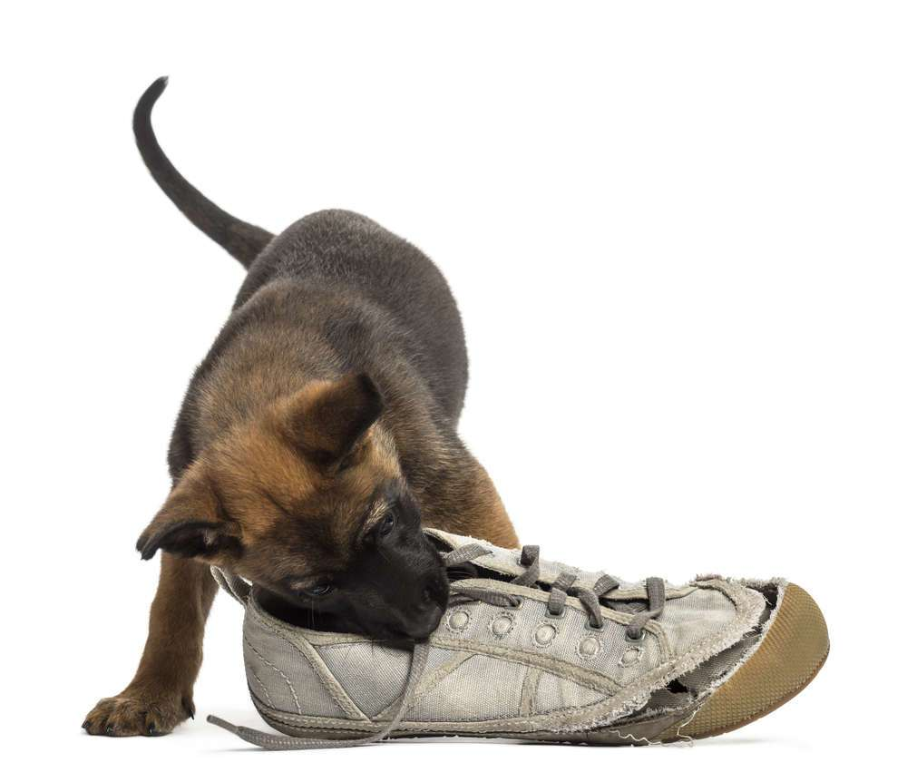 Dogs chewing