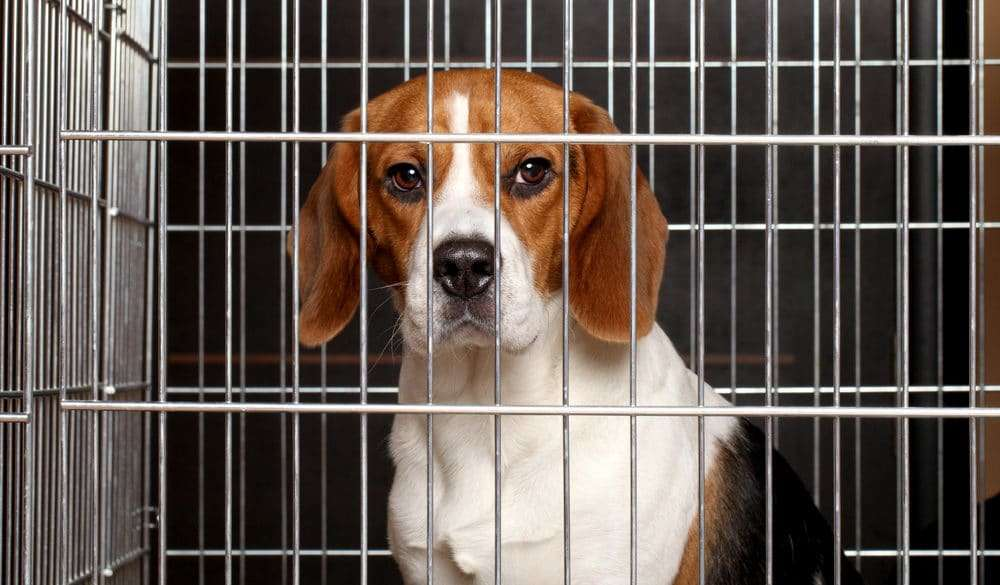 The Strengthening of Pet Protection Laws